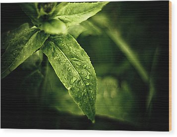 Raindrops Wood Print by Jason Naudi Photography