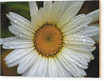 Raindrops On A Daisy Wood Print