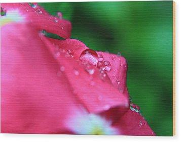 Raindrops On A Flower I Wood Print