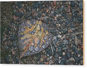Raindrops Wood Print by Shirley Mailloux
