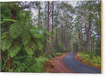 Rainforest - Port Macquarie - Australia Wood Print by Bryan Freeman