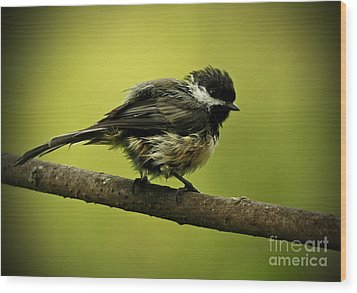 Rainy Days - Chickadee Wood Print by Inspired Nature Photography Fine Art Photography