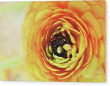 Ranunculus In Orange Wood Print by Stephanie Frey