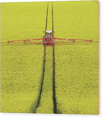 Rape Seed Spraying Wood Print by JT images