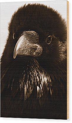 Raven In Black Wood Print by Michael Cinnamond