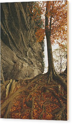 Raven Rock And Autumn Colored Beech Wood Print by Raymond Gehman