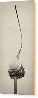 Reaching For The Sky Wood Print by Stelios Kleanthous