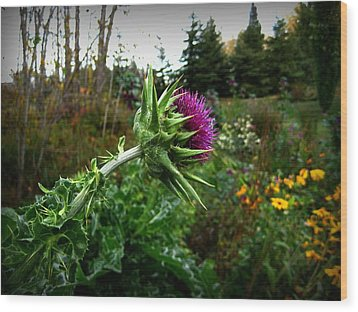 Reaching Milk Thistle Wood Print by Shirley Sirois