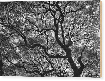 Reaching To The Heavens Wood Print by Andrew Crispi