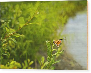 Wood Print featuring the photograph Ready Set Go Viceroy Butterfly by Marianne Campolongo