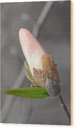Ready To Unfold Wood Print by Lisa Phillips