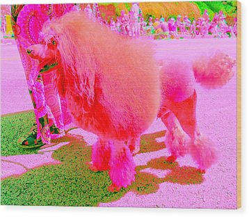 Really Pink Poodle Wood Print by Randall Weidner