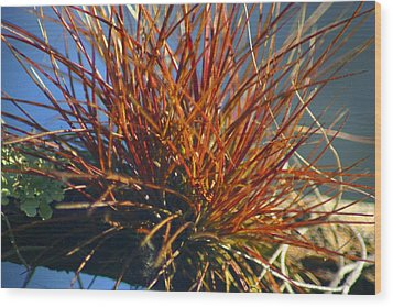 Wood Print featuring the photograph Red Air Plant by Jeanne Andrews