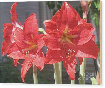 Wood Print featuring the photograph Red Amaryllis by Kume Bryant