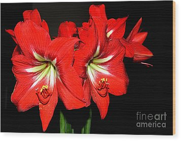 Red Amaryllis Twins Wood Print by Pravine Chester