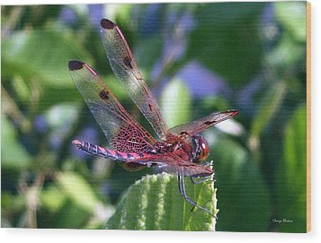 Wood Print featuring the photograph Red And Black Dragonfly by George Bostian