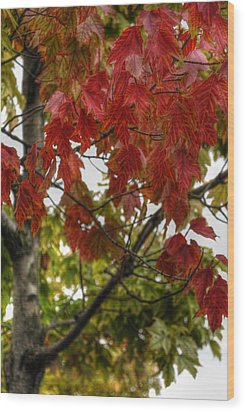 Wood Print featuring the photograph Red And Green Prior X-mas by Michael Frank Jr