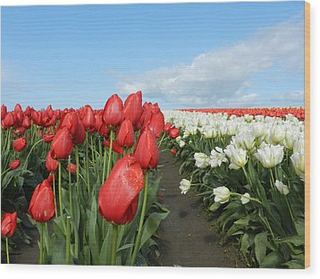 Wood Print featuring the photograph Red And White Tulips by Karen Molenaar Terrell