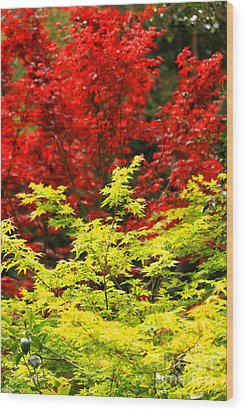 Red And Yellow Leaves Wood Print by James Eddy