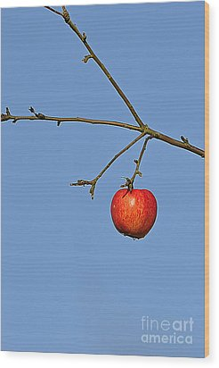 Red Apple Wood Print by Conny Sjostrom
