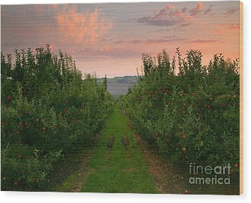 Red Apple Sunset Wood Print by Mike  Dawson