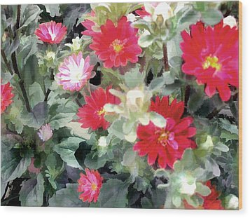 Red Asters Wood Print by Elaine Plesser