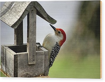 Red Bellied Woodpecker Wood Print by L Granville Laird