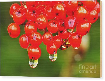 Red Berries And Raindrops Wood Print by Thomas R Fletcher