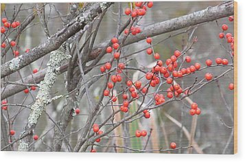 Red Berry Branch Wood Print