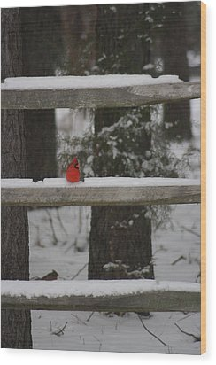 Wood Print featuring the photograph Red Bird by Stacy C Bottoms