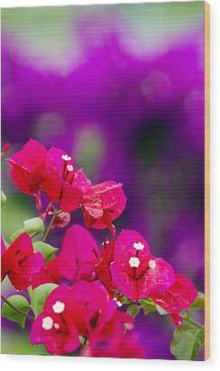 Red Bougainvillaeas Wood Print by Ron Dahlquist