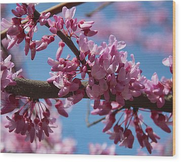 Red Bud In Bloom Wood Print