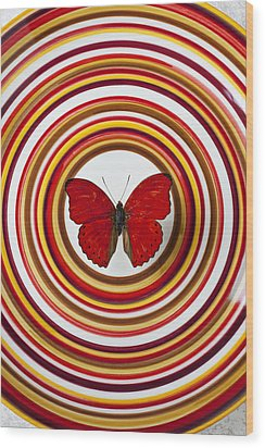 Red Butterfly On Plate With Many Circles Wood Print by Garry Gay