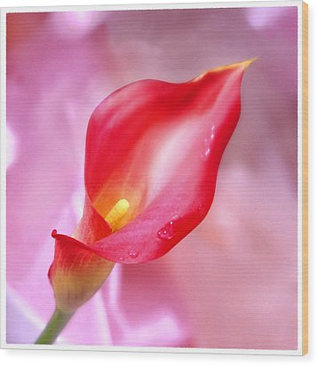 Red Calla Lily Wood Print by Mike McGlothlen