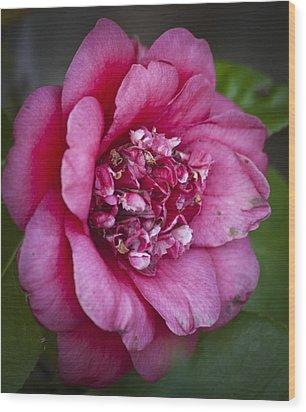 Red Camellia Wood Print by Teresa Mucha