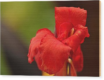 Red Canna Lilly Wood Print by Gene Sherrill