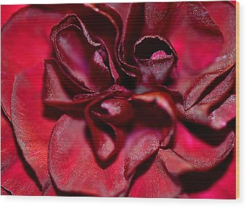 Red Carnation With Heart Wood Print by Sandi OReilly