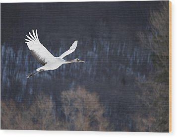 Red Crowned Crane Wood Print by Alexandre Shimoishi