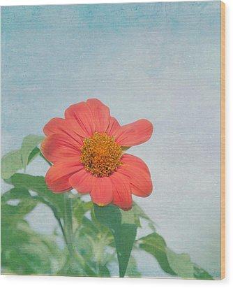 Red Daisy Flower Wood Print by Kim Hojnacki