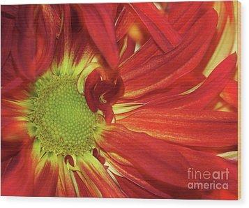 Red Daisy Too Wood Print by Sabrina L Ryan