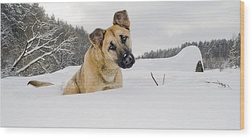 Red Dog Sits In A Snowdrift Wood Print