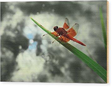 Red Dragonfly Wood Print by Viktor Savchenko
