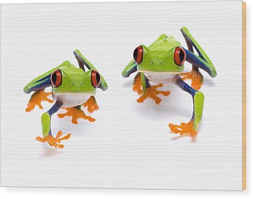 Red-eyed Treefrogs Walking Wood Print by Mark Bowler and Photo Researchers