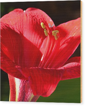 Wood Print featuring the photograph Red Faced Lily by Tanya Tanski