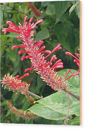 Red Fingerlings Wood Print by Robert Meyers-Lussier