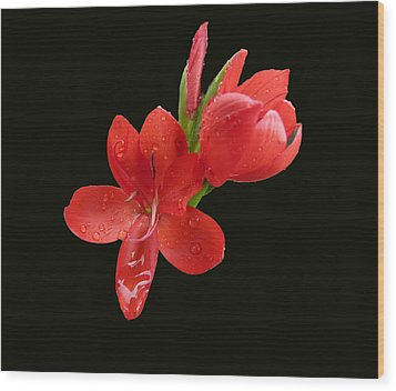 Wood Print featuring the photograph Red Flower by Lynn Bolt