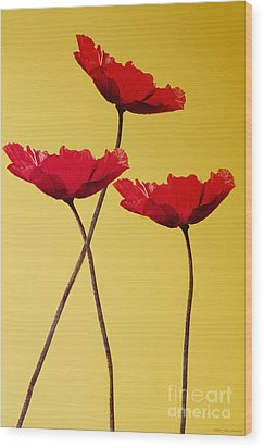 Red-flowered Corn Poppies Wood Print by MaryJane Armstrong