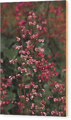 Red Flowers Wood Print by Svetlana Sewell