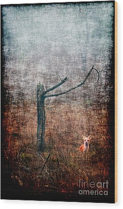 Wood Print featuring the photograph Red Fox Under Tree by Dan Friend