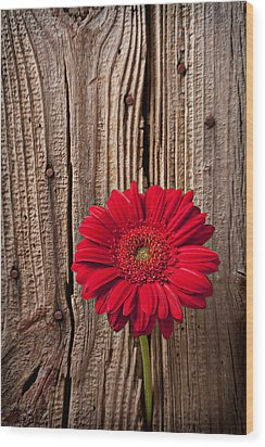 Red Gerbera Daisy With Wooden Wall Wood Print by Garry Gay